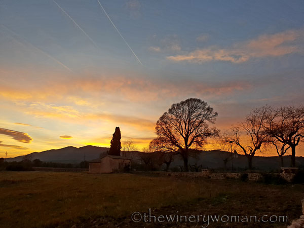sunset_in_the_vineyard6_1.8.19_tww
