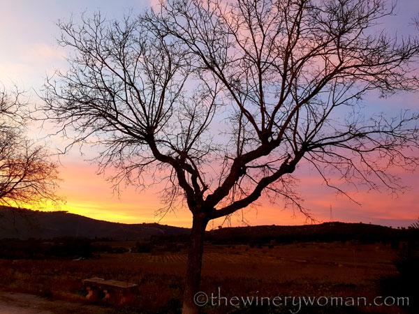 sunset_in_the_vineyard9_1.8.19_tww