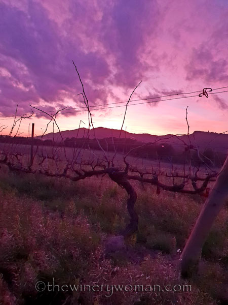 sunset_vineyard2_1.4.19_tww