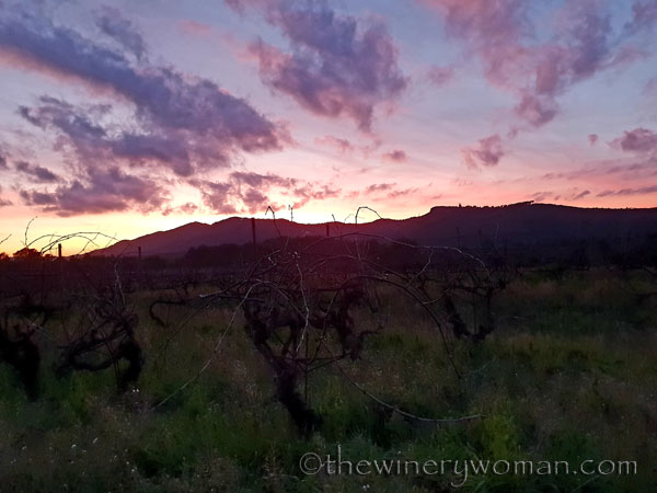 sunset_vineyard9_1.4.19_tww