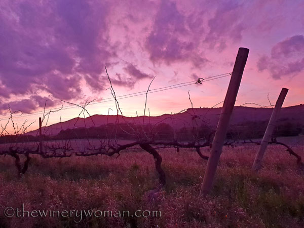 sunset_vineyard_1.4.19_tww