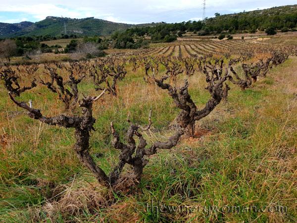 vineyard3_1.31.19_tww