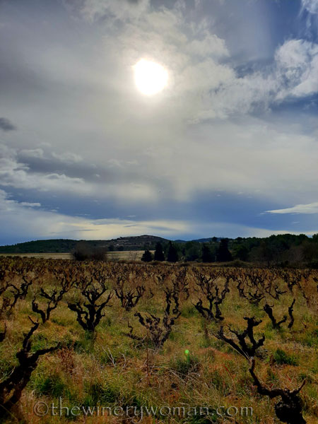vineyard4_1.31.19_tww