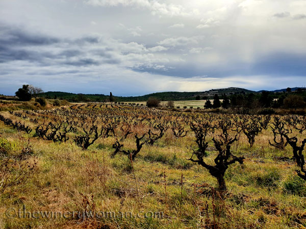 vineyard5_1.31.19_tww