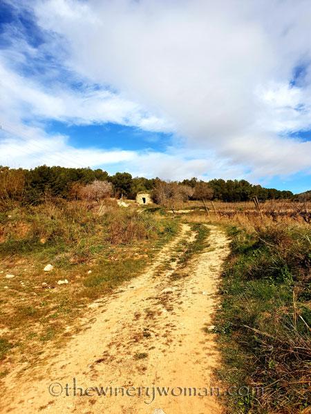 vineyard6_1.31.19_tww