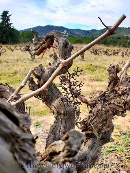vineyard_1.31.19_tww