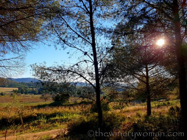 vineyard_walk10_1.6.19_tww
