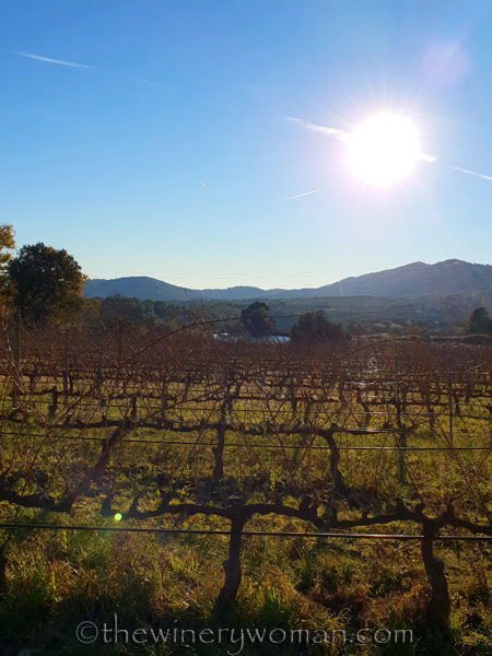 vineyard_walk16_1.6.19_tww