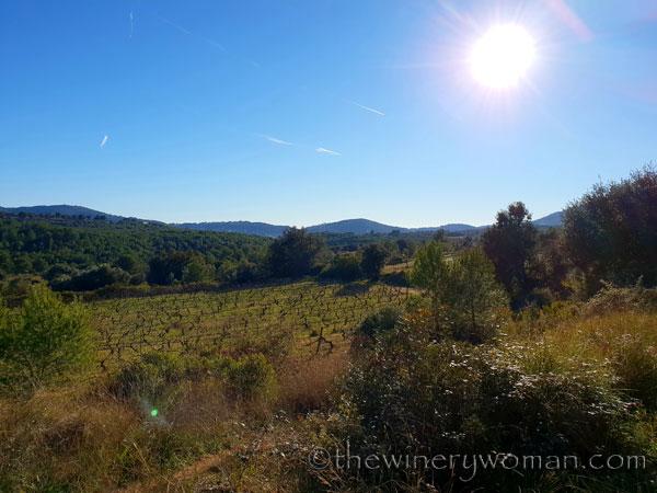vineyard_walk3_1.6.19_tww