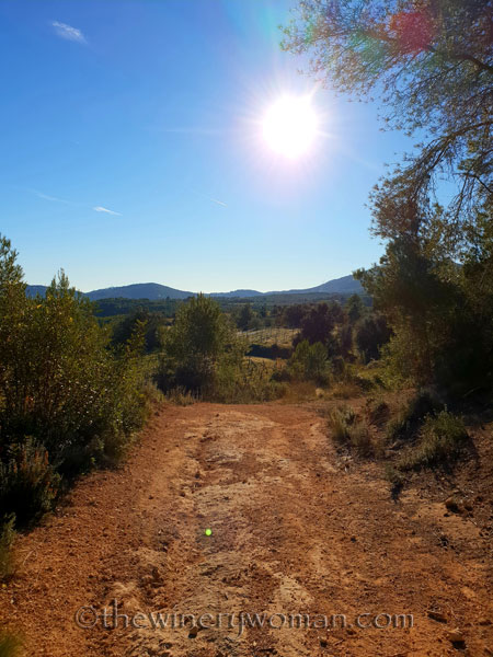 vineyard_walk6_1.6.19_tww