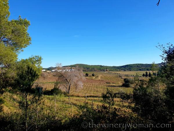 vineyard_walk7_1.6.19_tww
