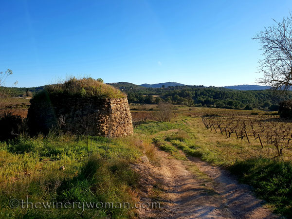 vineyard_walk8_1.6.19_tww