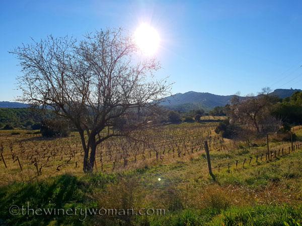 vineyard_walk9_1.6.19_tww