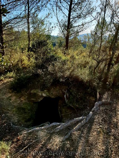 walk-in-the-woods10_1.12.19_tww