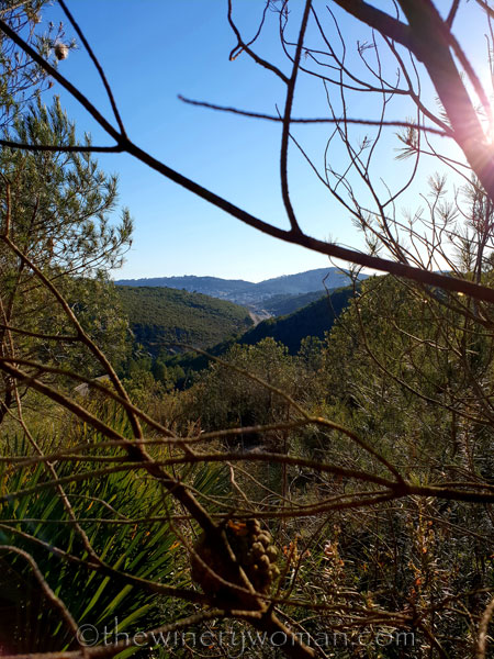 walk-in-the-woods14_1.12.19_tww