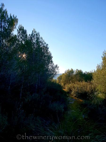 walk-in-the-woods16_1.12.19_tww