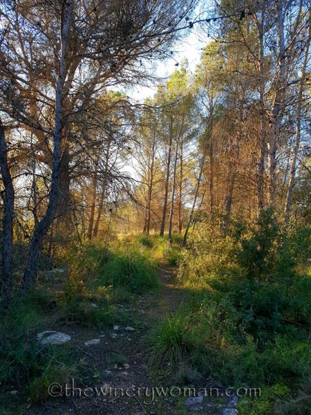 walk-in-the-woods17_1.12.19_tww