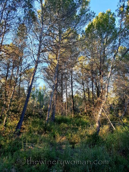walk-in-the-woods18_1.12.19_tww