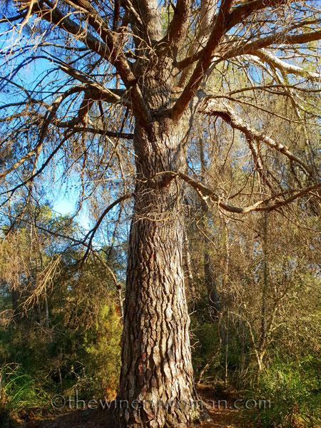 walk-in-the-woods6_1.12.19_tww
