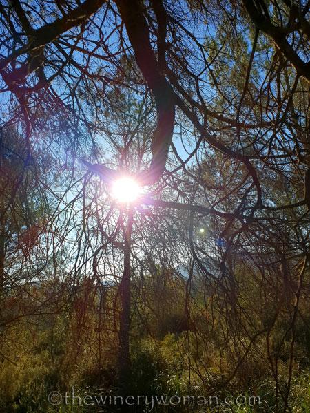 walk-in-the-woods8_1.12.19_tww