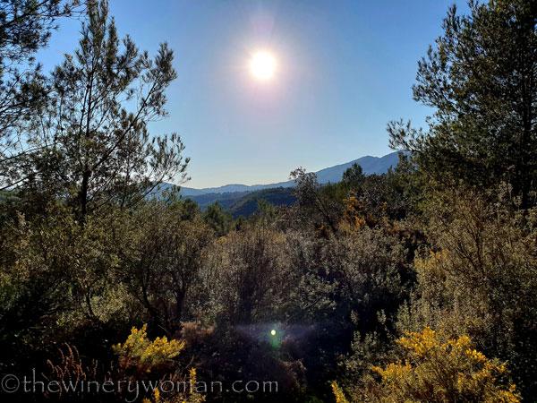 walk-in-the-woods_1.12.19_tww