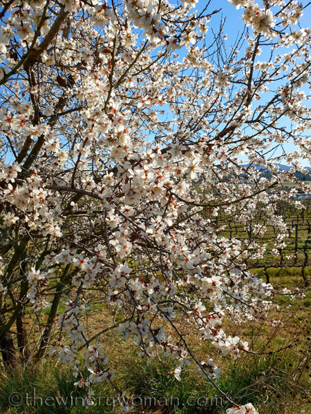 Almond_Blossoms5_2.12.19_TWW