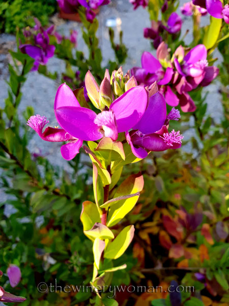 Spring_Flowers_2.24.19_TWW