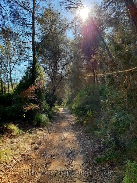 Sunlit-forest-path_2.3.19_TWW