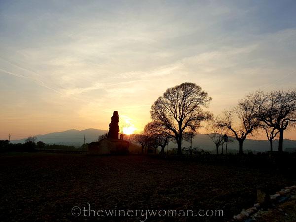Sunset_Vineyard2_2.9.19_TWW