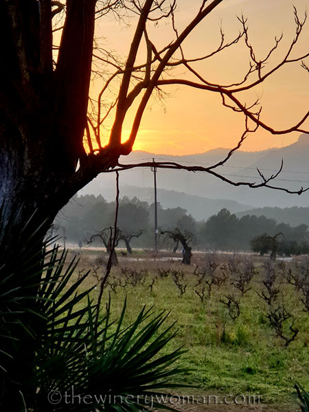 Sunset_Vineyard4_2.9.19_TWW