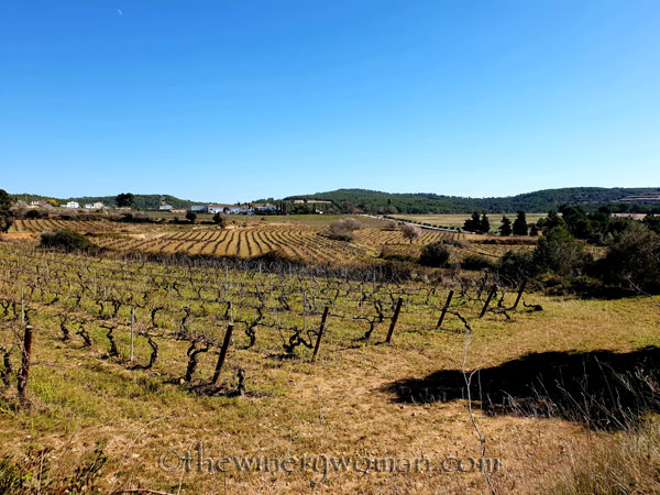 Walk_in_the_vineyard18_2.12.19_TWW