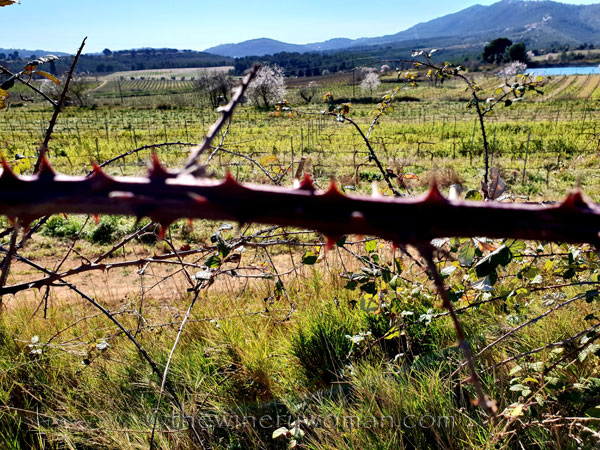 Walk_in_the_vineyard24_2.12.19_TWW