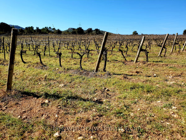 Walk_in_the_vineyard7_2.12.19_TWW
