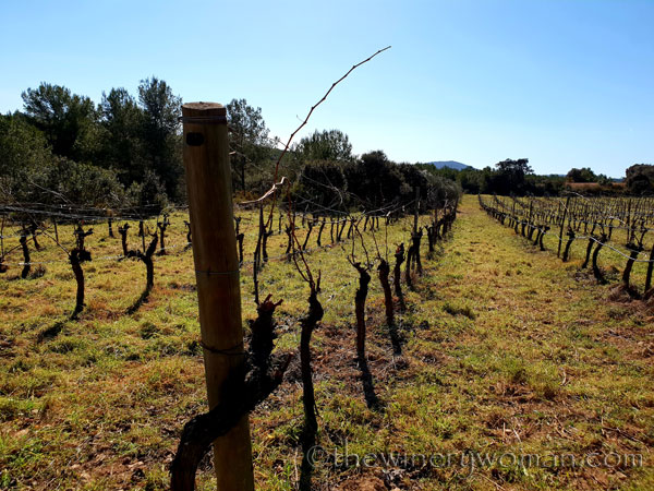 Walk_in_the_vineyard8_2.12.19_TWW