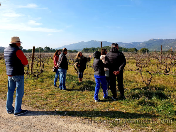 Winery_Tour_Viladellops3_2.9.19_TWW