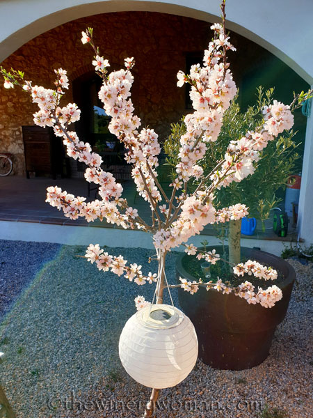 Almond_Blossoms_and_Bees2_3.5.19_TWW