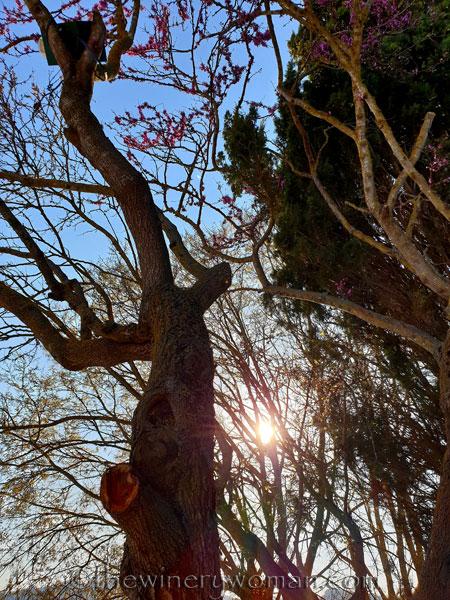 Bloomin_Tree10_3.25.19_TWW