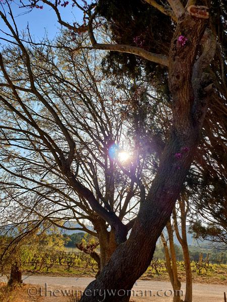 Bloomin_Tree11_3.25.19_TWW