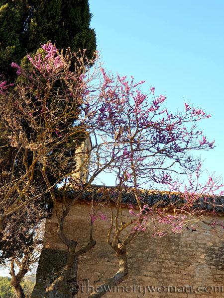 Bloomin_Tree12_3.25.19_TWW