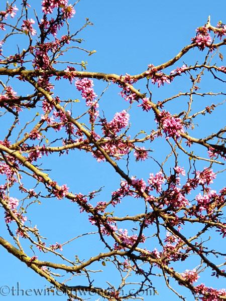 Bloomin_Tree2_3.25.19_TWW