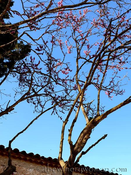 Bloomin_Tree4_3.25.19_TWW