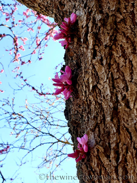 Bloomin_Tree5_3.25.19_TWW