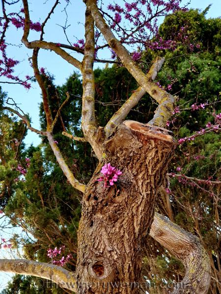 Bloomin_Tree6_3.25.19_TWW