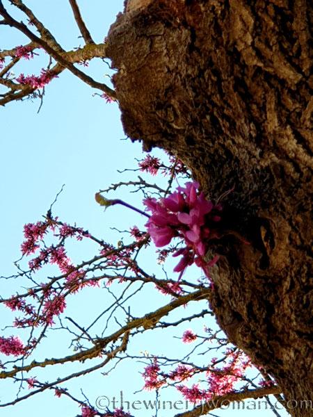Bloomin_Tree7_3.25.19_TWW