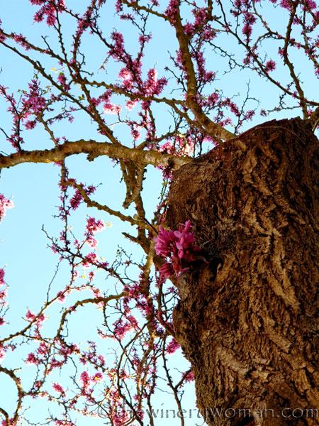 Bloomin_Tree8_3.25.19_TWW
