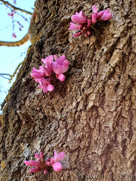 Bloomin_Tree9_3.25.19_TWW
