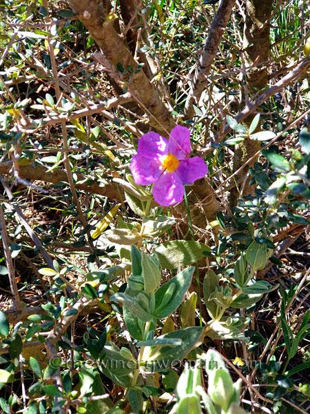 Flowers11_3.24.19_TWW