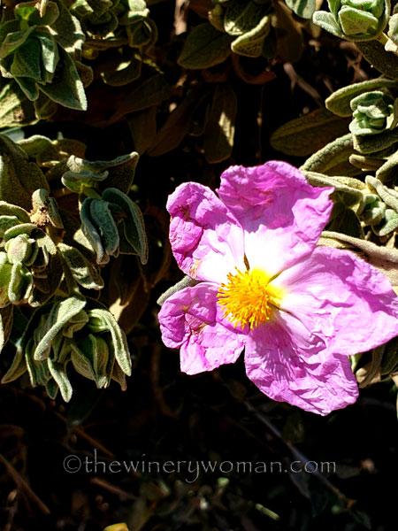 Flowers12_3.24.19_TWW