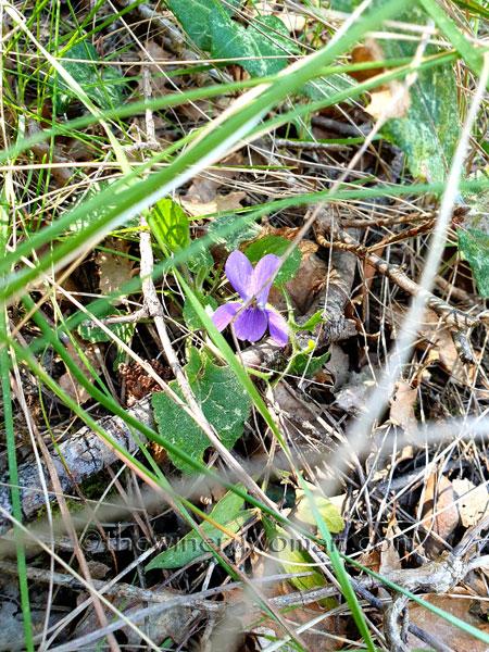 Flowers14_3.24.19_TWW