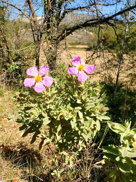 Flowers2_3.24.19_TWW